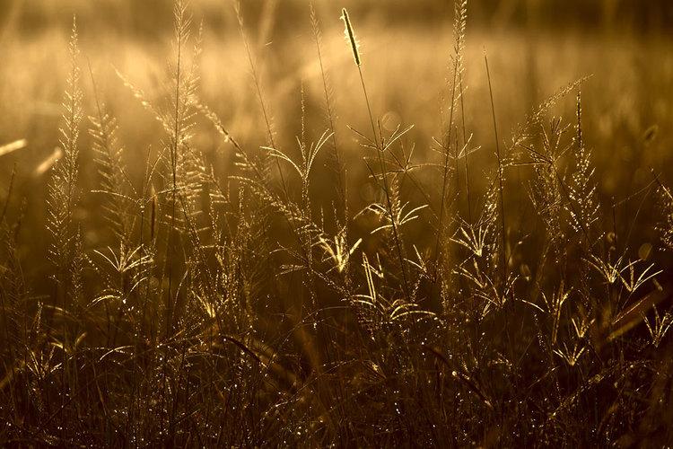 肯尼亚草原风光