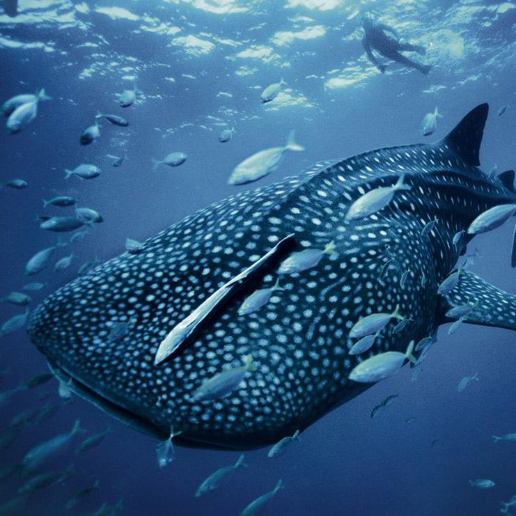 海洋深处的水生世界