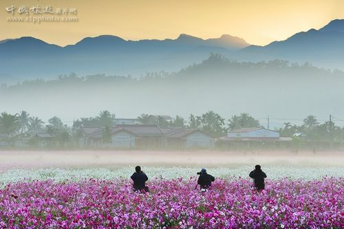 台湾三大黄金赏花摄影地